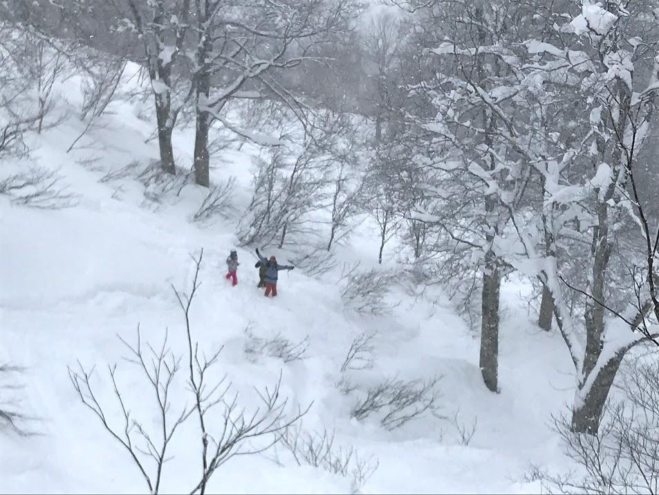 野沢温泉スキー場 やまびこコースツリーラン