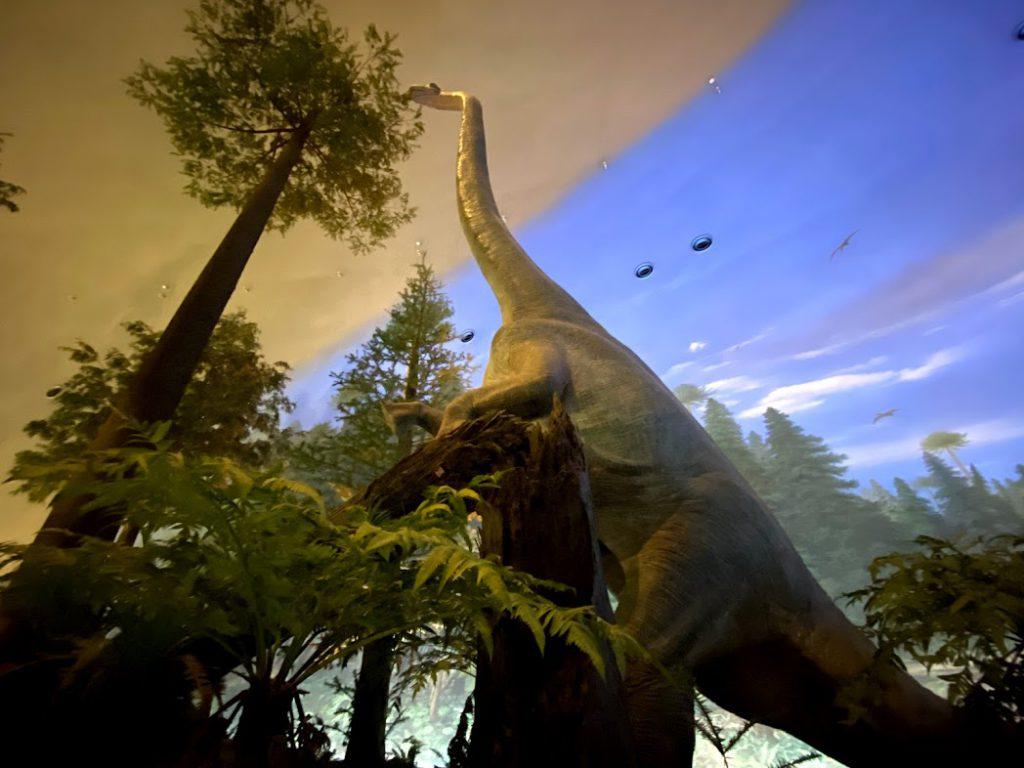 北陸&関西 車中泊旅6日目:恐竜博物館〜和歌山県白浜