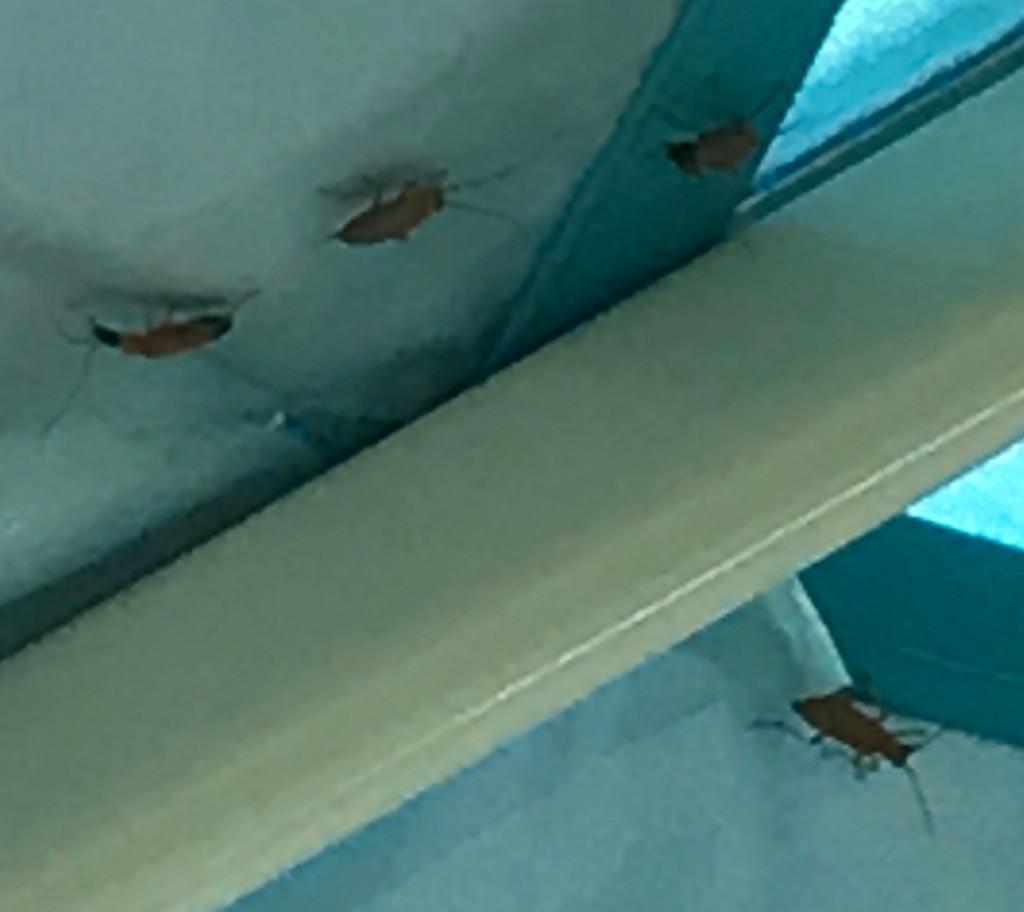 車中泊中に見たこともない虫が大量発生